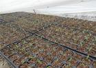 番茄育苗技术