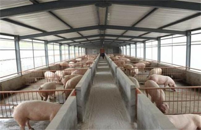 春季猪舍管理要点