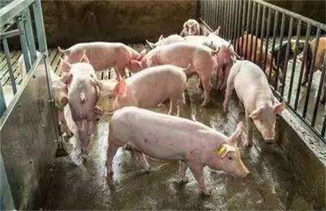 养猪场潮湿该怎么办