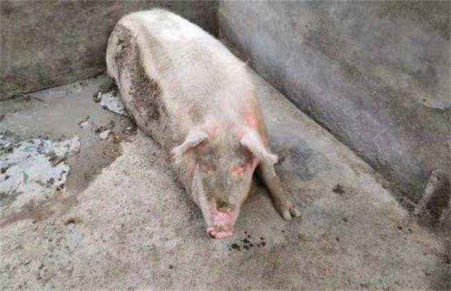 母猪产程过长怎么办