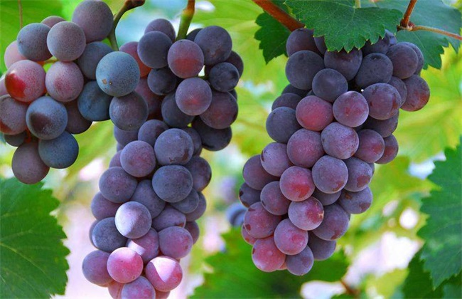 种植10亩葡萄前期投资