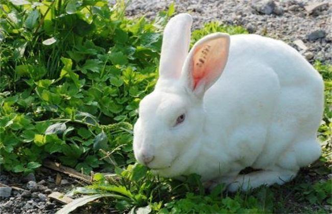 兔子养殖成本与利润分析