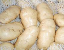 土豆常见的种类与图片介绍