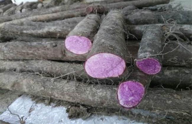 紫山药多少钱一斤