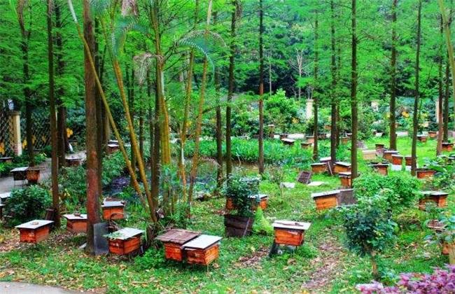 养10箱蜜蜂一年能赚多少钱