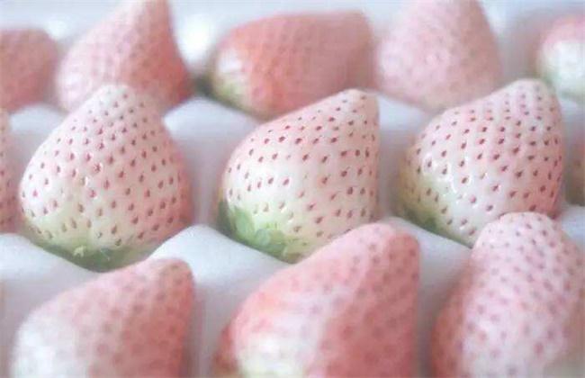 白草莓价格多少钱一斤
