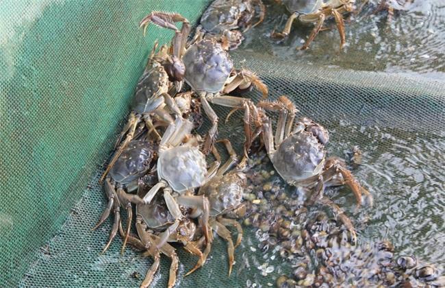 养一亩螃蟹 成本 利润