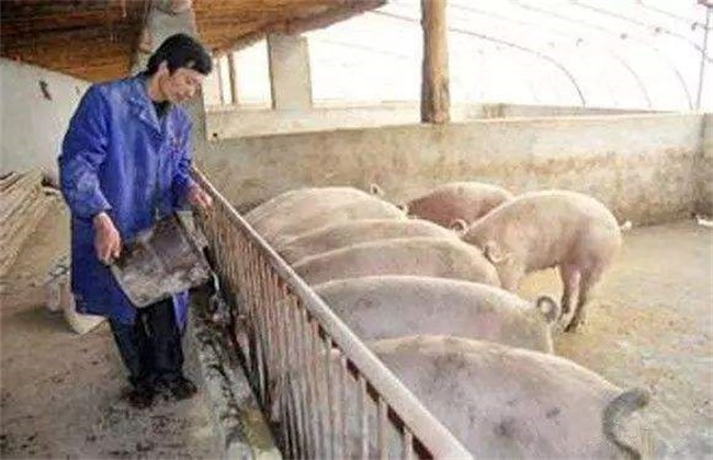 夏季猪采食量下降怎么办