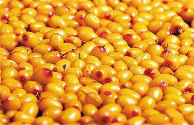 沙棘果多少钱一斤