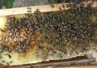 新手养蜂该怎么做