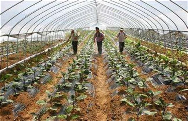 大棚蔬菜施肥方法和注意事项