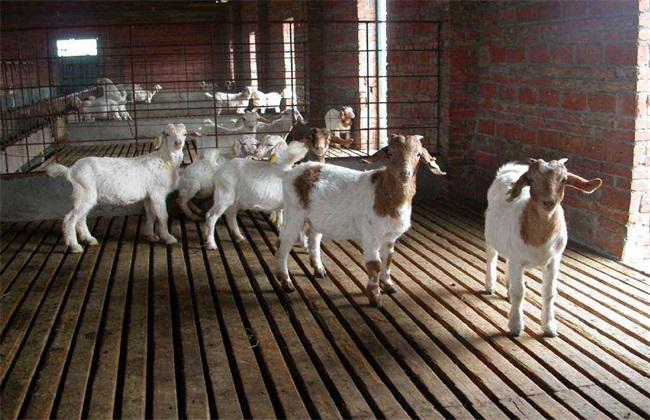 如何防止羊近亲繁殖