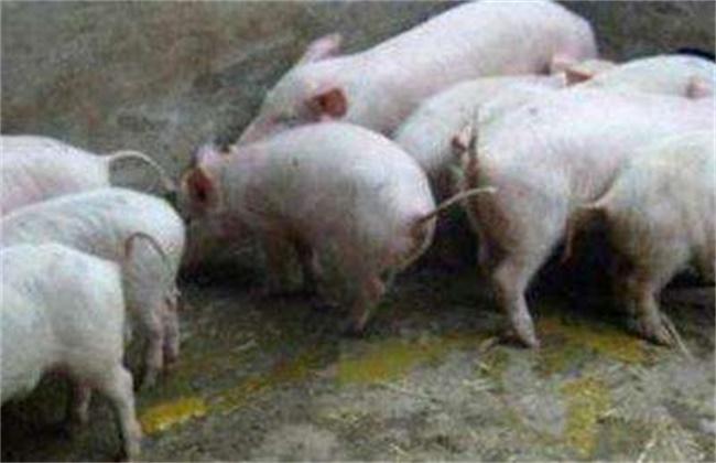 仔猪黄白痢原因及防治方法