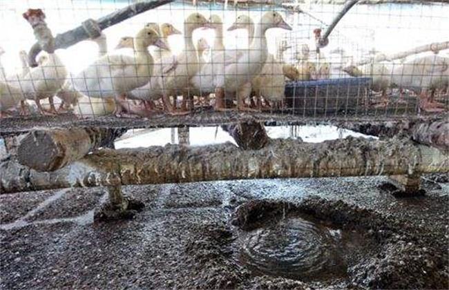 养殖场除臭有什么办法