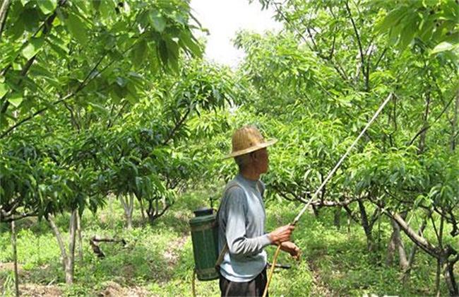 果树夏季喷药注意事项