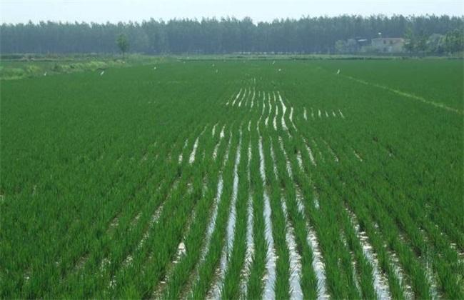 水稻灌溉技术