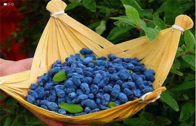 蓝靛果的多少钱一斤