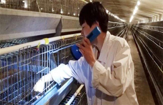 蛋鸡空栏期怎么进行彻底消毒