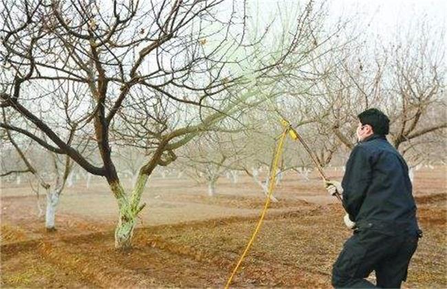 杏树的施肥方法