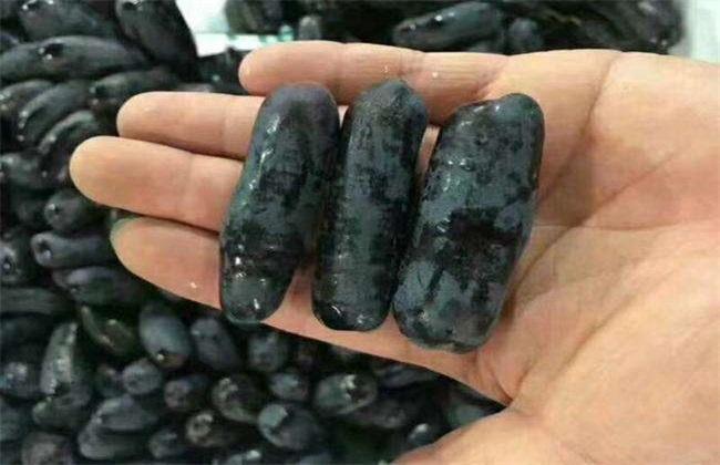 蓝宝石葡萄 扦插技术 繁殖