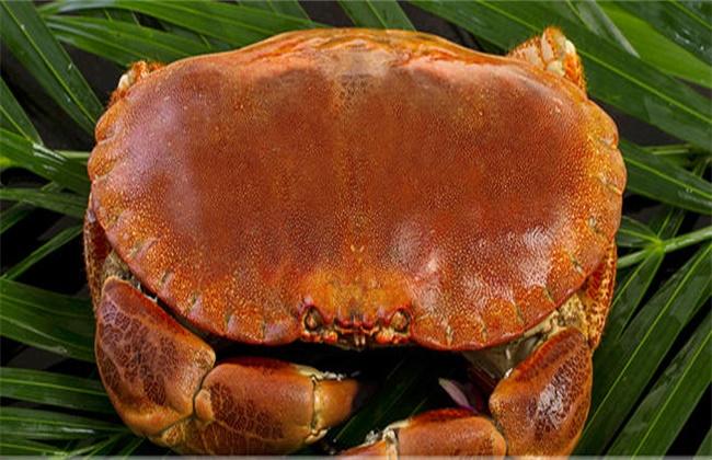 面包蟹多少钱一斤