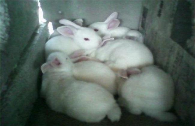 母兔不孕的原因是什么