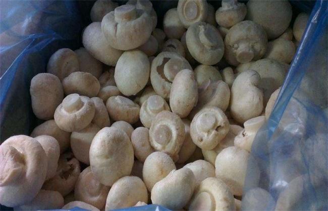 双孢菇多少钱一斤