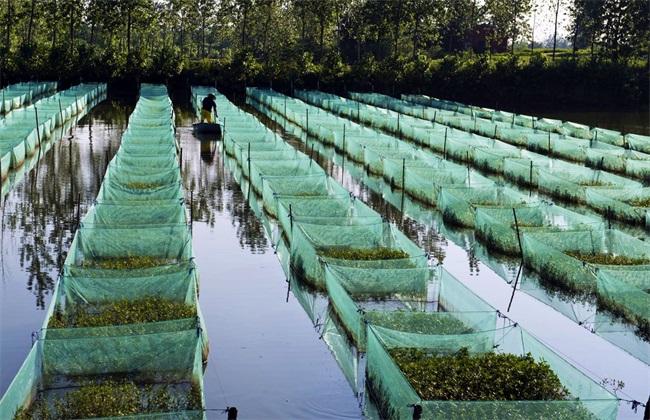 黄鳝 养殖失败 四种原因