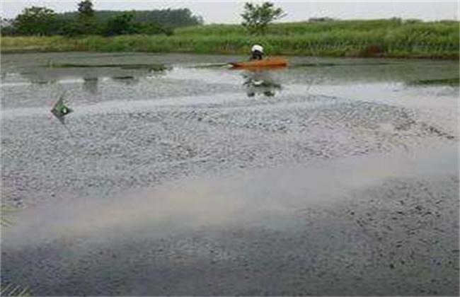 梅雨季节养殖塘该怎么管理