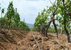 葡萄节水灌溉方法