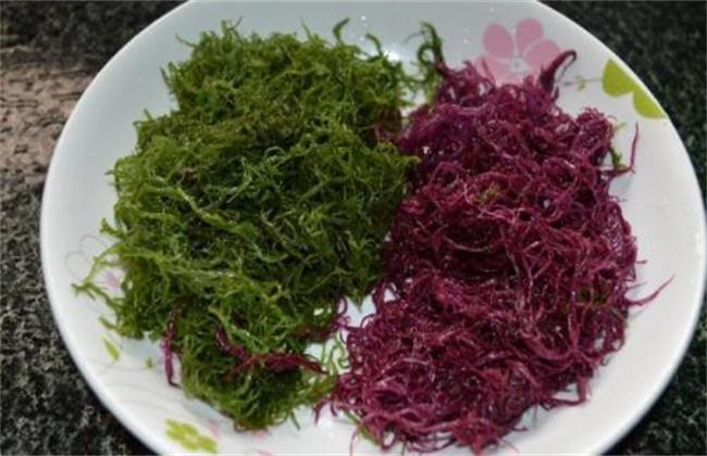 龙须菜多少钱一斤