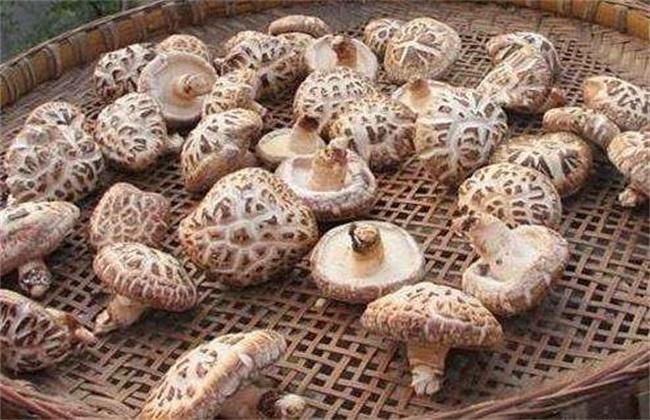 花菇多少钱一斤