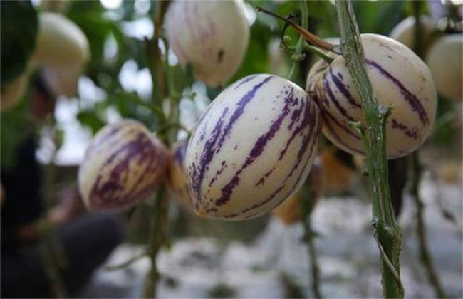农村 种植赚钱 项目 创业致富