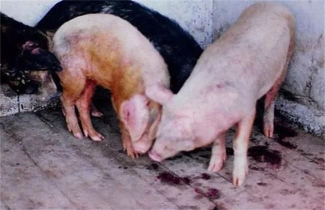 猪 亚硝酸盐中毒 怎么办