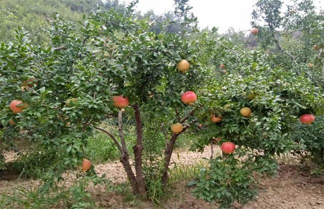 农村种植什么赚钱