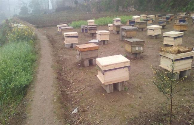蜜蜂 养殖技术 注意事项