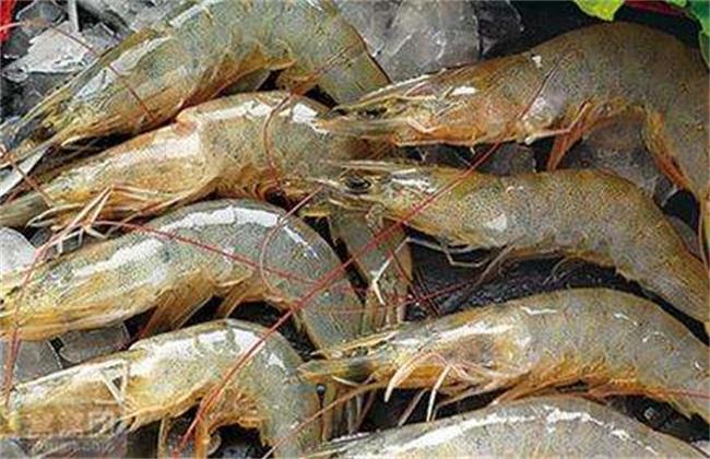 青虾养殖亩利润多少