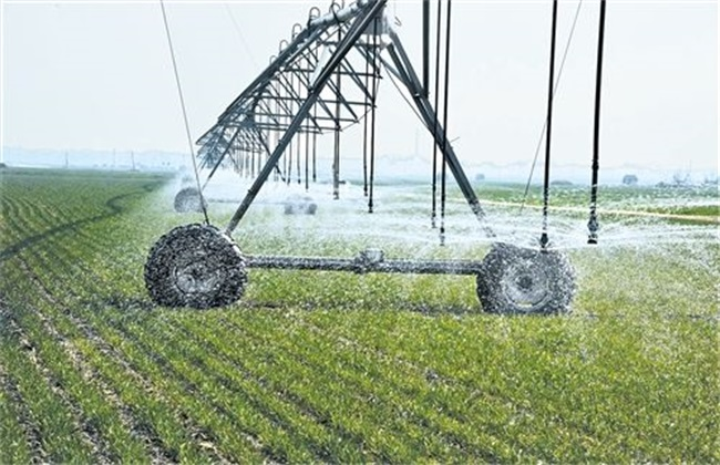 小麦需要什么生长环境