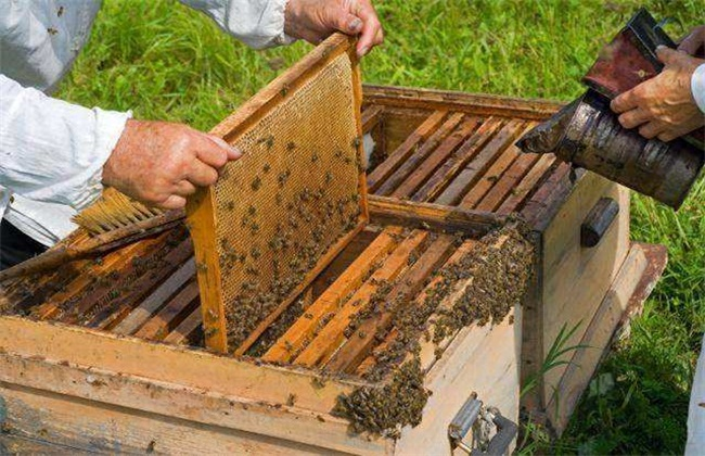 蜂群检查 检查目的 注意事项