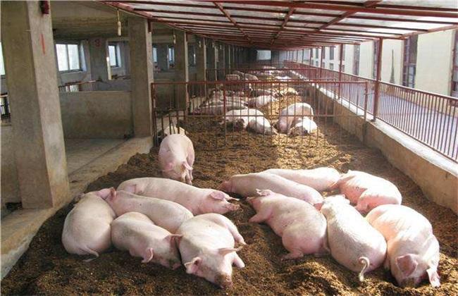 配制猪饲料 注意事项 方法