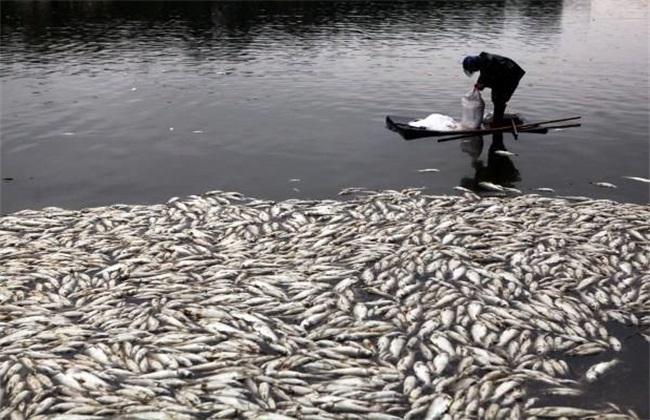 鱼塘清塘方法