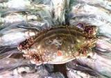 红膏蟹多少钱一斤
