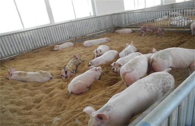 生态养猪 优势 养殖优势