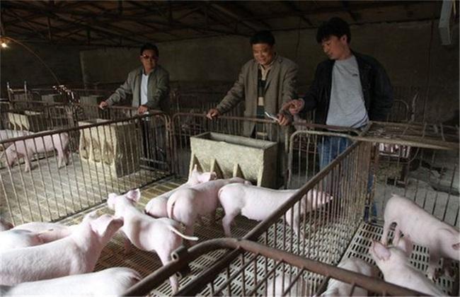 养猪驱虫注意事项