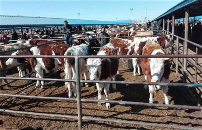 犊牛 常见疾病 治疗方法