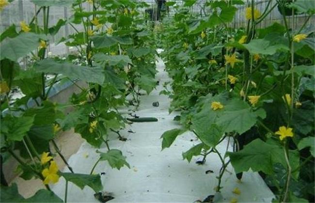 适合无土栽培 蔬菜 无土栽培