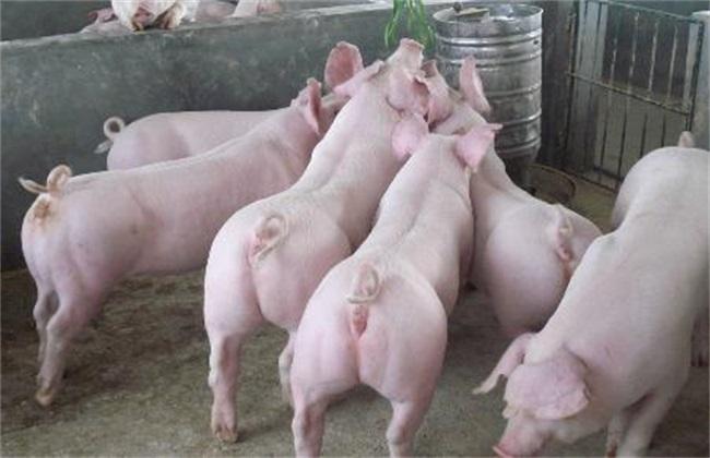 仔猪 生长缓慢 怎么办