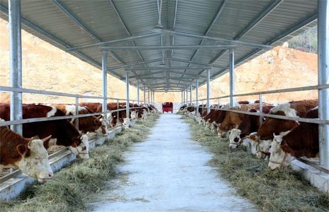 肉牛养殖管理