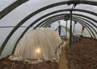圣女果设施栽培技术
