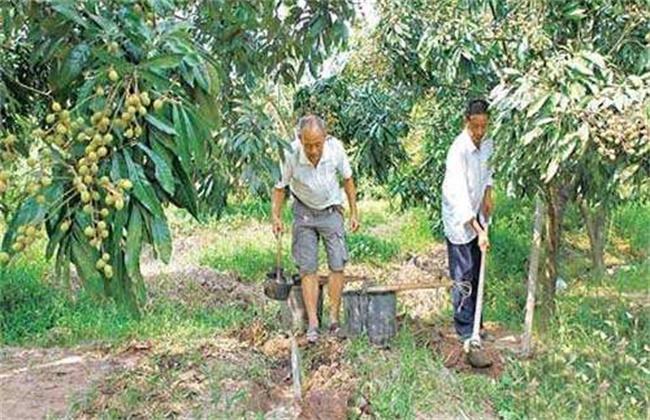 龙眼幼树施肥技术
